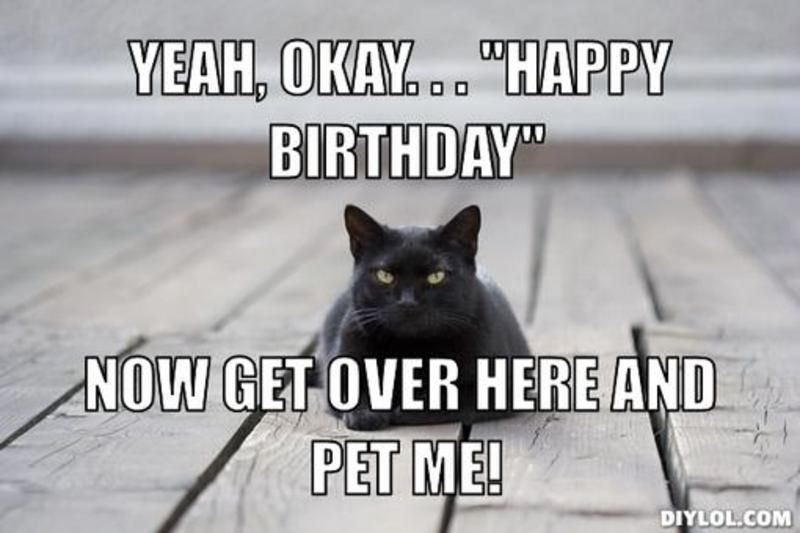 Funny Birthday Black Cat Resized black cat meme