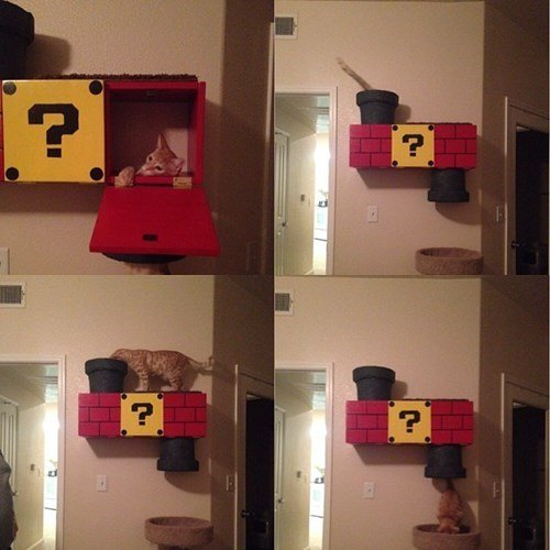 cat tree Cats creative funny Super Mario bros