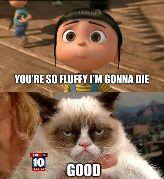 Grumpy cat is awesome see her movie Grumpy Cats Worst Christmas Ever with Aubrey Plaza as grumpy cat she is awesome