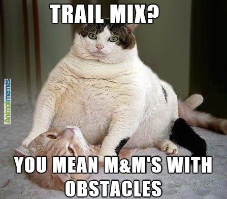 Collect the Beautiful Funny Fat Cat Memes Clean