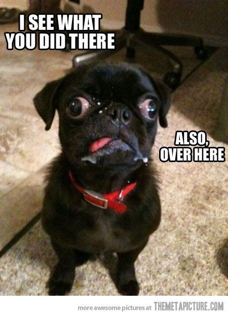 funny derp dog black pug on imgfave