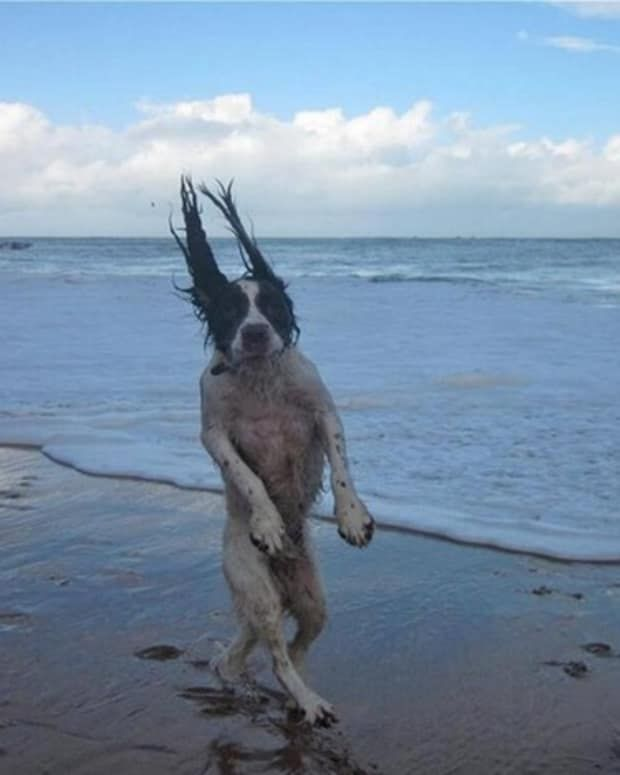 26 Dogs That Have Mastered Perfect Timing