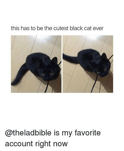 Funny Black Cat and Black Cats this has to be the cutest black