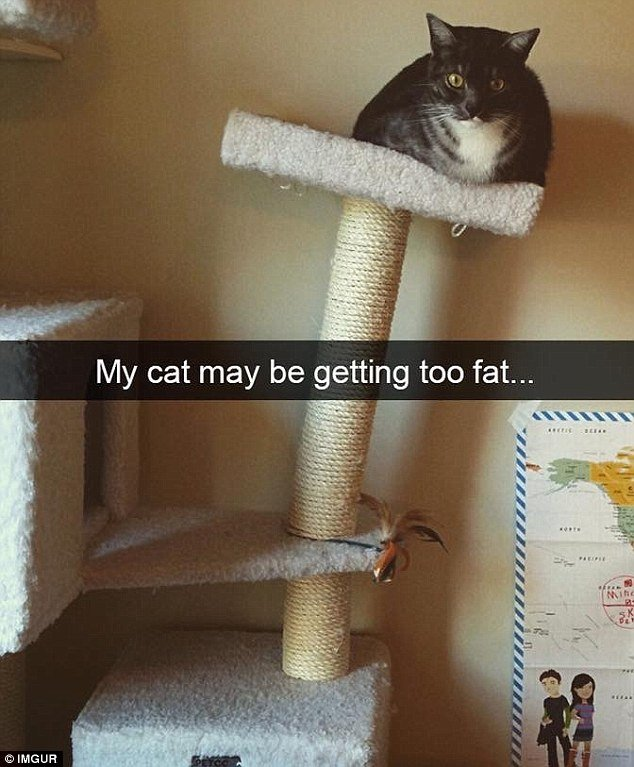 Does your cat need to go on a t This owner noticed their pet might