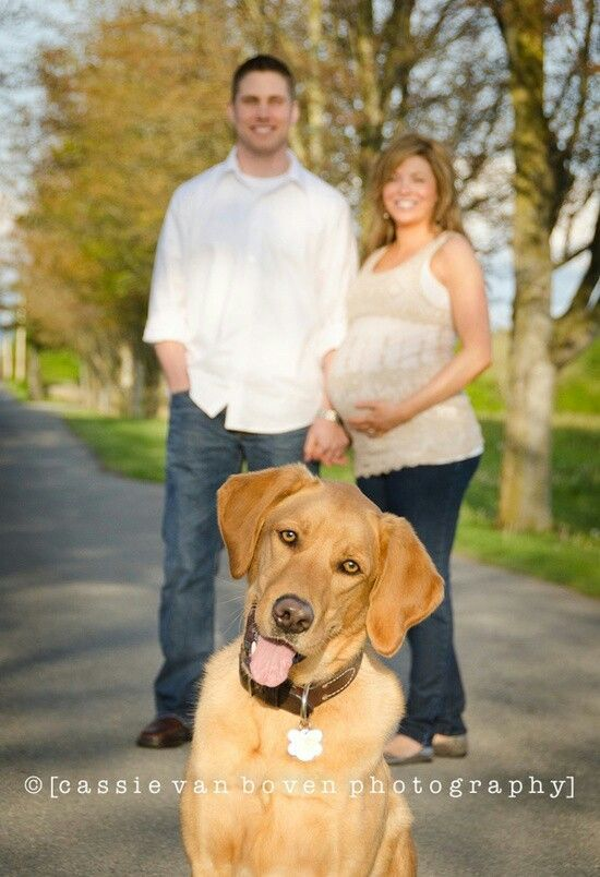 maternity photo with dog can t imagine Hobie or Bella would sit still long enough for a photo like this