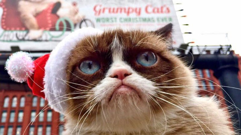 Before last Thursday I had no idea that Grumpy Cat was ing to San Francisco And if someone had told me that less than 24 hours after learning about her