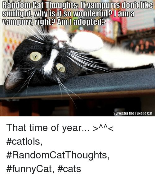 Cats Memes and Time Random Cat Thoutunts vampurrs dont like sunlight Why