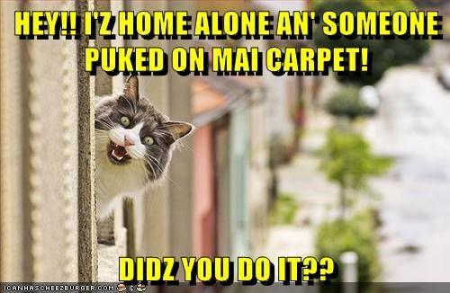 puke vomit clean captions barf alone Cats guilty carpet