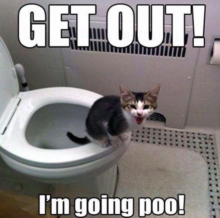 Get out funny kitten meme