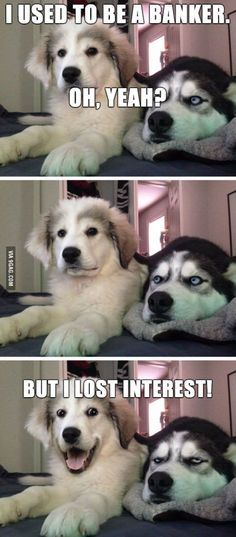 Don t you all love puns Pun HuskyHusky HumorFunny Husky MemeDog