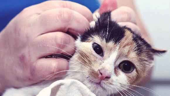 9 Signs of a Sick Kitten And What to Do
