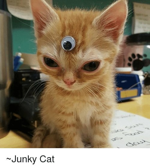 Dank Memes Cat and Junkie Junky Cat