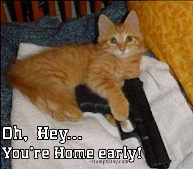 oh hey you re home early gun and cat