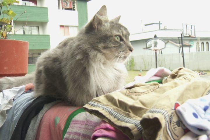 Klepto Kitty – True Life Cat Burglar