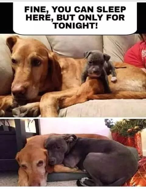 Cute Puppies Cute Dogs Funny Puppy Memes Dog Memes Funny Animal Memes