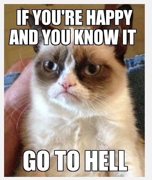 Funny Cats Top 49 Most Funniest Grumpy Cat