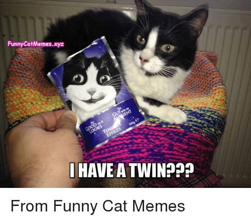 Collect the Fresh Images Of Funny Cat Memes