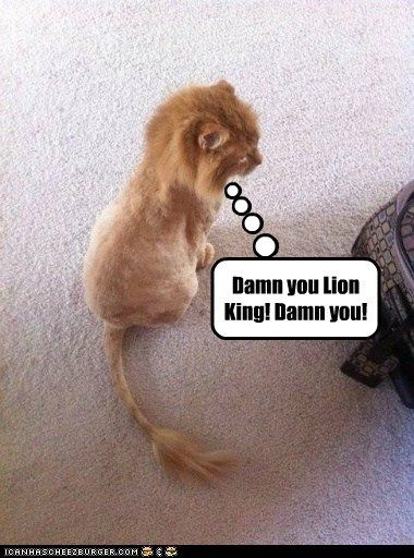 Collect the Incredible Funny Cat Pictures Lion King