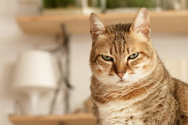 Dealing With an Aggressive Cat 7 Reasons Why Cats Be e Aggressive Catster