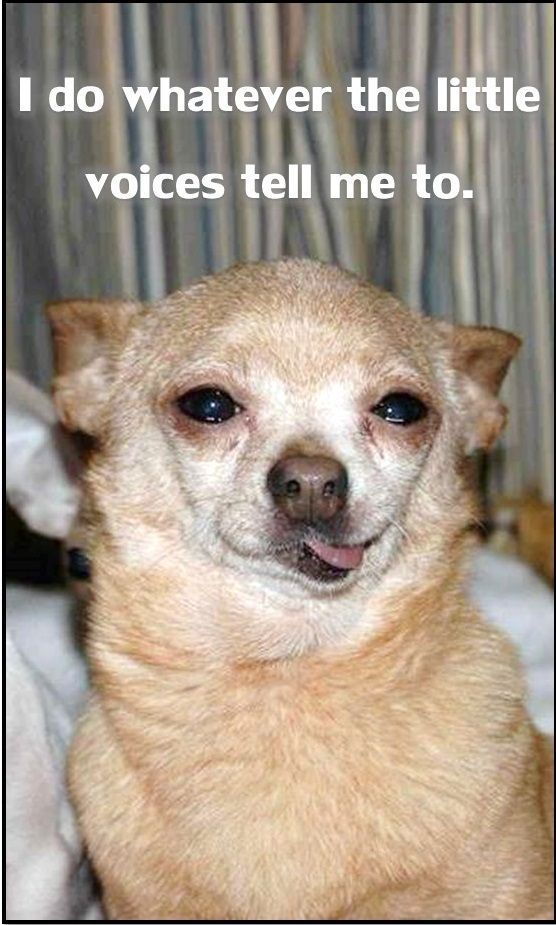 Sutter little voices FluffyButts funny dog meme