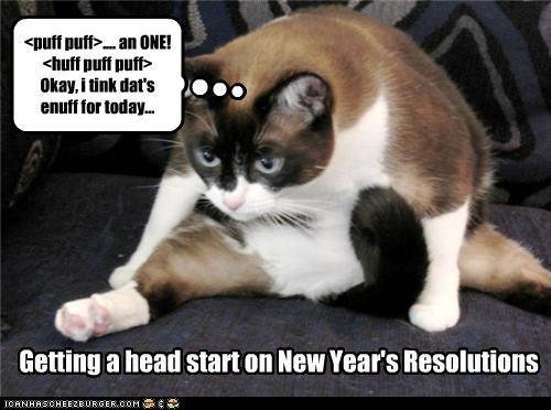 Collect the Incredible Funny Happy New Year Cat Pictures