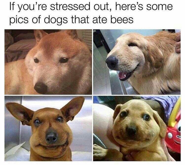 Those poor Boi s Funny Pics Funny Cute Cute Funny Animals Funny