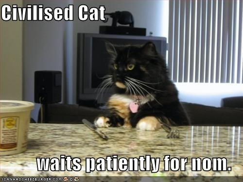 Funny Cat With Captions funny cats pictures with captions STOP working hard at waiting Feline Frenzy Pinterest