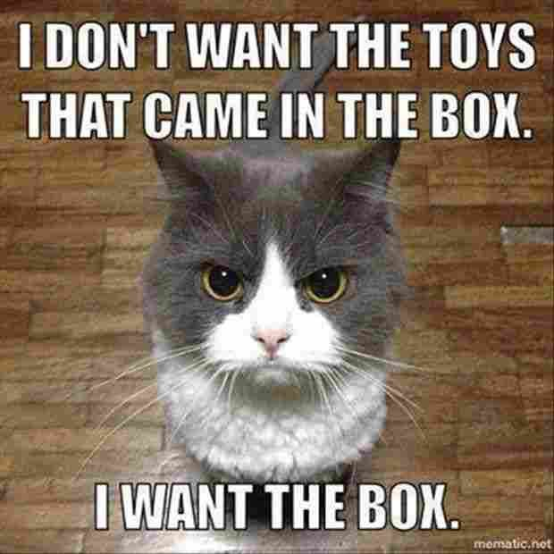 funny cat memes 50