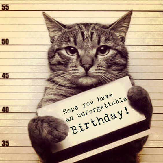 Funny happy birthday meme with a cat in a police custody