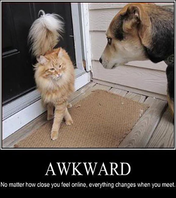 Funny Dog and Cat with Caption 18