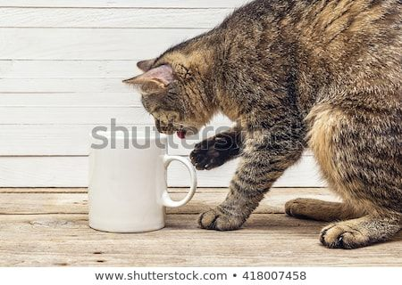 Funny cat drinking from a white coffee mug Design a coffee mug
