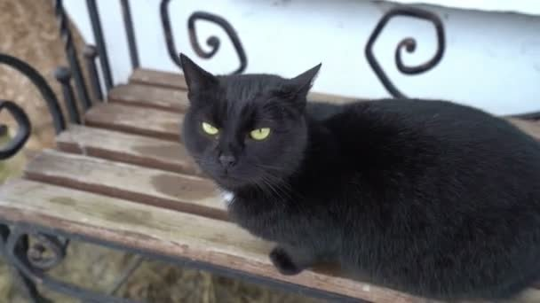 Two funny cute domestic black cat playing on the bench outdoors resting relaxing funny