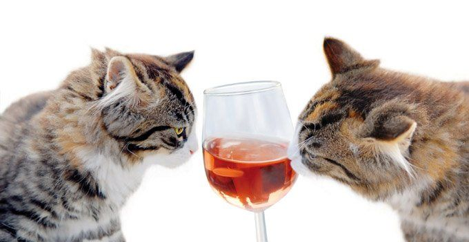 cats alcohol toxic