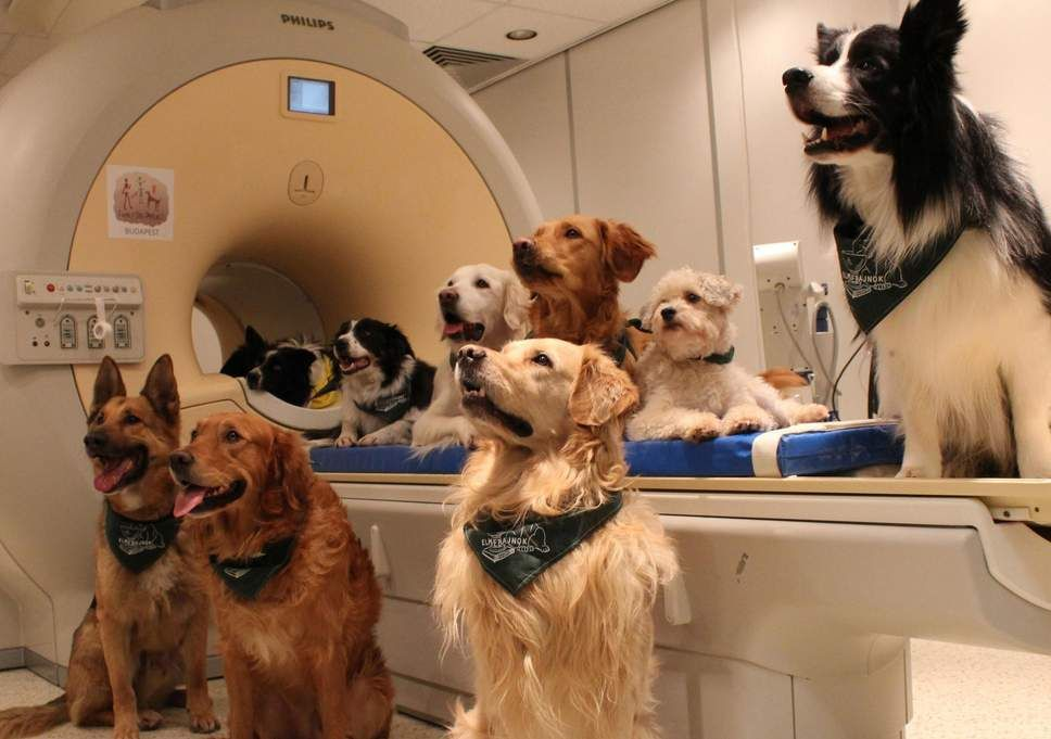 Dogs seen here around an MRI scanner appear to having an understanding of some