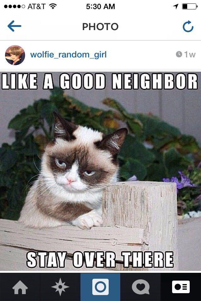 Funny Grumpy Cat Memes Grumpy Cat Quotes Funny Monday Memes Funny Cats