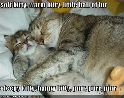 Coffee Is Good Sleep Better Lolcats Lol Cat Memes Funny
