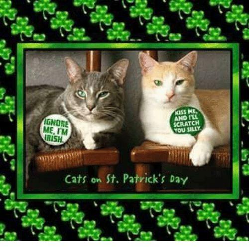 Irish Memes and Scratch IGNORE IM SCRATCH IRISH Cats on St Patrick s