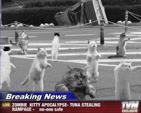 Collect the Inspirational Funny Zombie Apocalypse Cat Memes