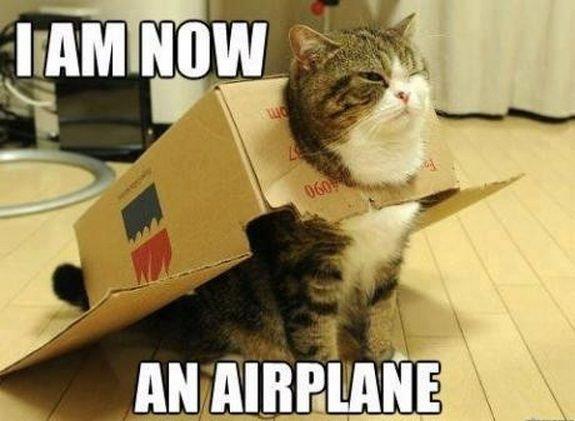 16 Hilarious Cat Memes