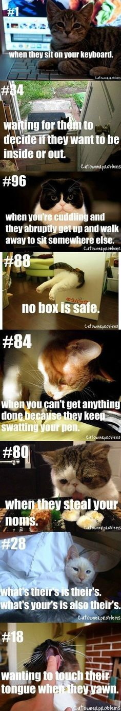 Funny pictures about Cat people problems Oh and cool pics about Cat people problems Also Cat people problems