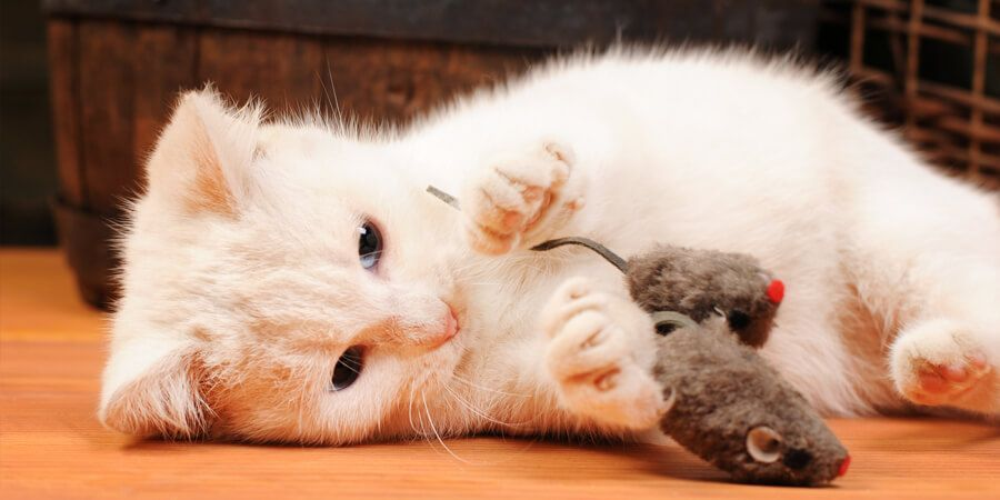 The 10 Best Homemade Cat Toys Simply DIY Gifts for Cats World s Best Cat Litter Blog