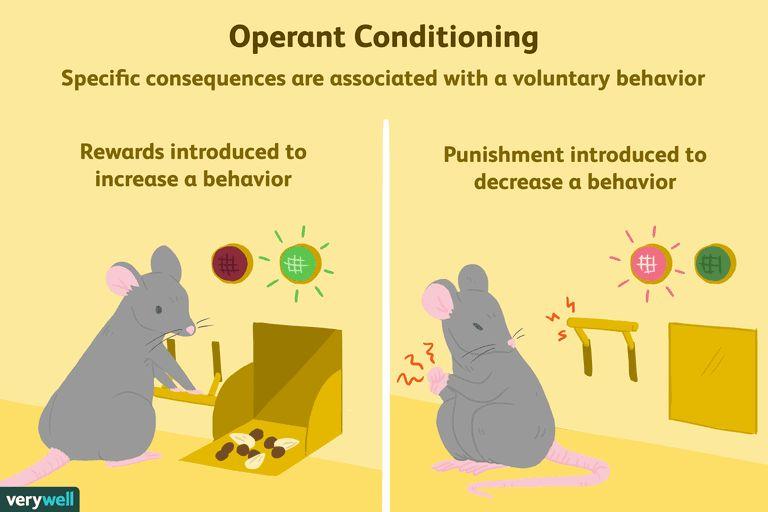 operant conditioning a21 5b242abe8e1b6e0036fafff6