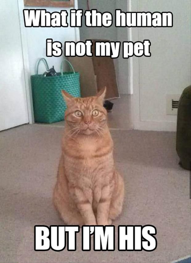 30 Pet Memes Guaranteed To Give You A Good Laugh sayingimages meme petmeme petmemes