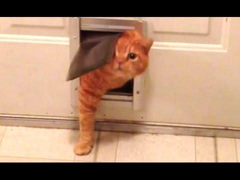 Fat Cat A Funny Fat Cats vs Doors pilation NEW HD