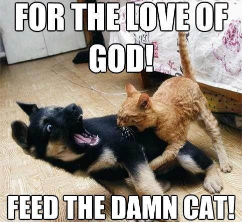 Best Funny Cat VS Dog Memes To Prove Who s Boss – Quotations and Quotes