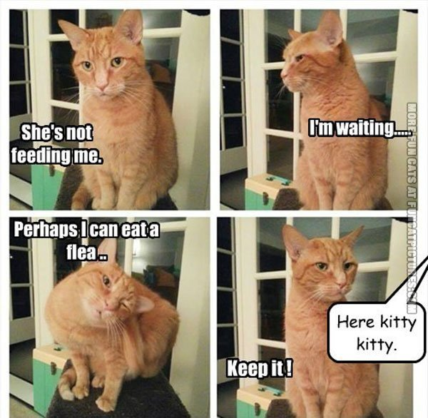 Collect the Lovely Get Me to Funny Cat Pictures