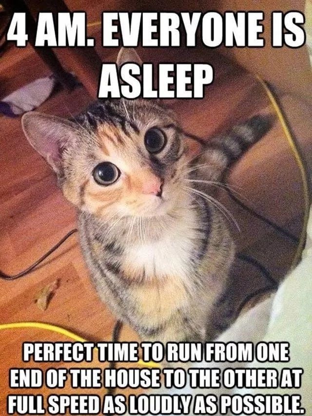 Funny memes on cats