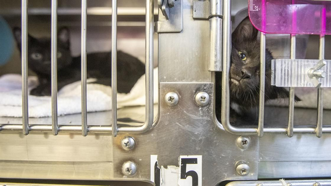 36 dead animals found at unopened Rapid City pet store Crime & Courts