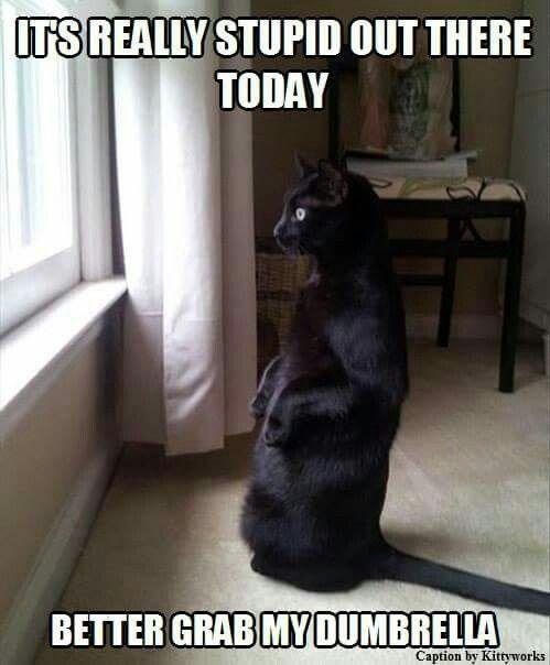 Get my dumbrella Infj Quotes Memes Humor Cats Vintage Christmas