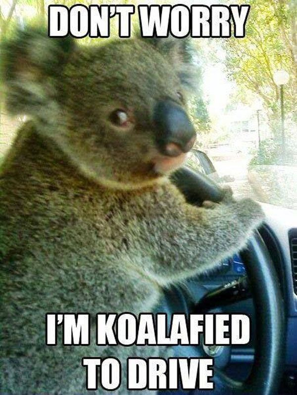 Don t worry I m Koalafied to drive — Ned Martin s Amused